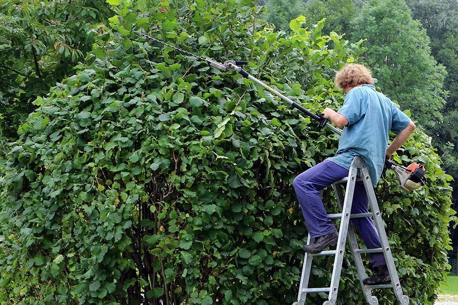Tree Services Chester County PA-landscape-gardener